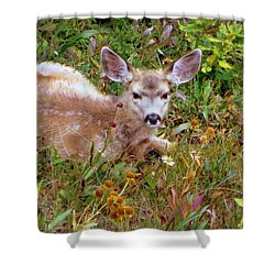 Shower Curtain featuring the photograph Mule Deer Fawn by Karen Shackles