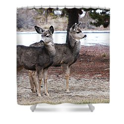 Mule Deer Fawns Shower Curtain