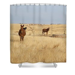 Mules In Gold Grass Shower Curtain