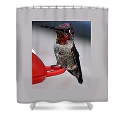 Shower Curtain featuring the photograph Multi Colored Hummingbird Male Anna by Jay Milo