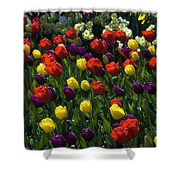 Multicolored Tulips At Tulip Festival. Shower Curtain by Yulia Kazansky