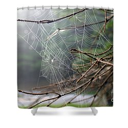 Multiple Webs - Near Shower Curtain