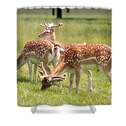 Shower Curtain featuring the photograph Multitasking Deer In Richmond Park by Rona Black