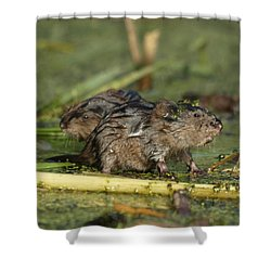 Shower Curtain featuring the photograph Munchkins by James Peterson