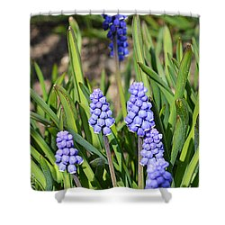 Muscari Armeniacum Shower Curtain
