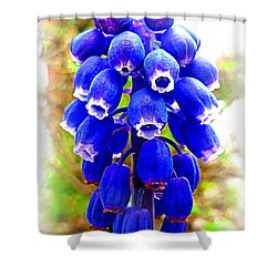 Muscari Grape Hyacinth Shower Curtain by The Creative Minds Art and Photography