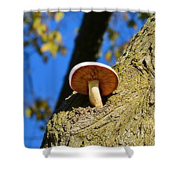 Shower Curtain featuring the photograph Mushroom In A Tree by Ally  White