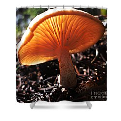 Mushroom Shower Curtain by Janice Westerberg