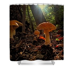 Shower Curtain featuring the photograph Mushroom Morning by GJ Blackman