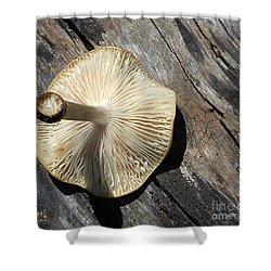 Shower Curtain featuring the photograph Mushroom On Stump by Tina M Wenger