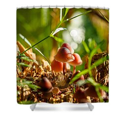 Mushrooms On A Decaying Stump Shower Curtain