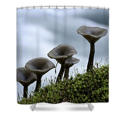 Shower Curtain featuring the photograph Mushrooms On Moss by Betty Depee
