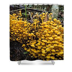 Mushrooms On Tree Trunk Panguana Nature Shower Curtain by Konrad Wothe