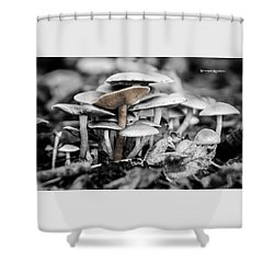 Shower Curtain featuring the photograph Mushrooms by Stwayne Keubrick