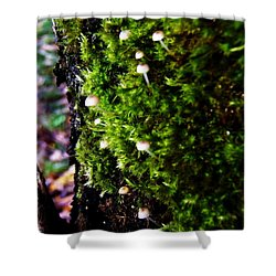 Shower Curtain featuring the photograph Mushrooms by Vanessa Palomino