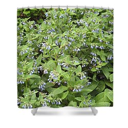Music In The Bush Shower Curtain