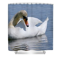 Mute Swan 1 Shower Curtain by Sharon Talson