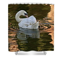 Shower Curtain featuring the photograph Preening by Kate Brown