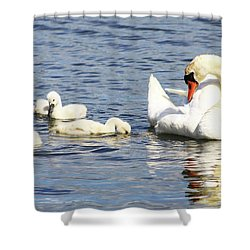 Mute Swans Shower Curtain by Alyce Taylor