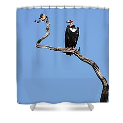 Mutual Admiration Shower Curtain by Fotosas Photography