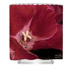 My Beauty Shower Curtain