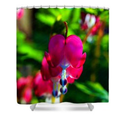 Shower Curtain featuring the photograph My Bleeding Heart by Peggy Franz
