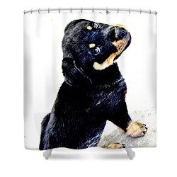 My Bone Shower Curtain by Mayhem Mediums