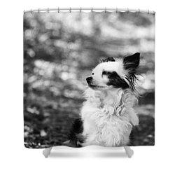 My Dog Shower Curtain by Daniel Precht