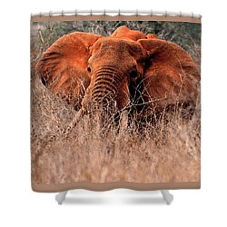 Shower Curtain featuring the photograph My Elephant In Africa by Phyllis Kaltenbach