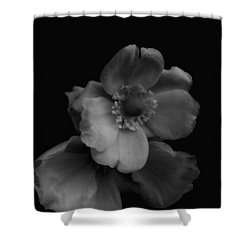 Shower Curtain featuring the photograph My Fair Lady by Rachel Mirror