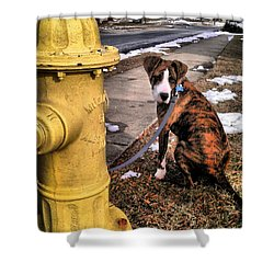 Shower Curtain featuring the photograph My Friend Plug by Robert McCubbin