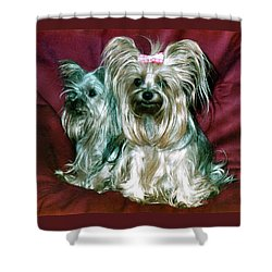 Shower Curtain featuring the photograph My Friends Yorkies by Phyllis Kaltenbach