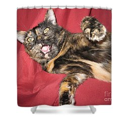 My Funny Cat Shower Curtain