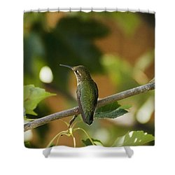 My Green Colored Hummingbird 4 Shower Curtain