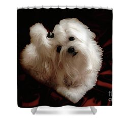 My Heart My Muse Shower Curtain by Lois Bryan
