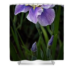 My Iris Shower Curtain by Penny Lisowski