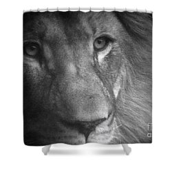 My Lion Eyes Shower Curtain by Thomas Woolworth
