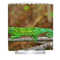 My Magical Tail Shower Curtain by Peggy Collins