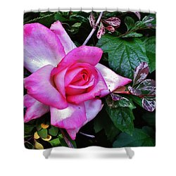 Shower Curtain featuring the photograph My Perfect Tea Rose by VLee Watson