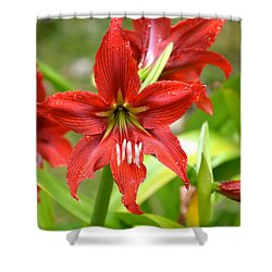 My Red Daylily...after The Rain Shower Curtain by Lehua Pekelo-Stearns
