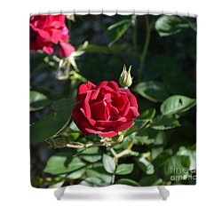 My Red Rose Shower Curtain by Alys Caviness-Gober