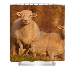 Shower Curtain featuring the photograph My Sheep ...   by Lydia Holly