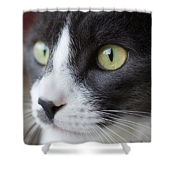 Shower Curtain featuring the photograph My Sweet Boy by Heidi Smith
