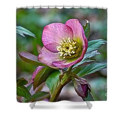 My Wild Xmas Rose Shower Curtain by Byron Varvarigos