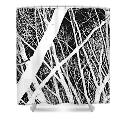 Mystic Forest Shower Curtain by Steven Milner