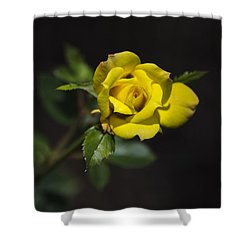 Mystic Yellow Rose Shower Curtain by Christina Rollo