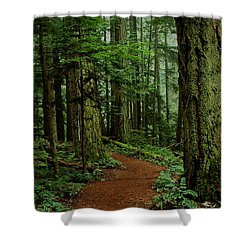 Mystical Path Shower Curtain