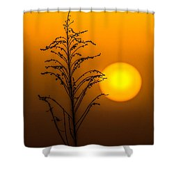 Mystical Sunset Shower Curtain by Shelby  Young