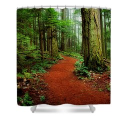 Mystical Trail Shower Curtain