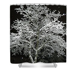 Mystical Winter Beauty Shower Curtain by Emmy Marie Vickers